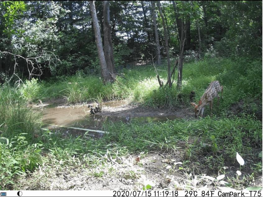 Campark T75 trail camera setup at day