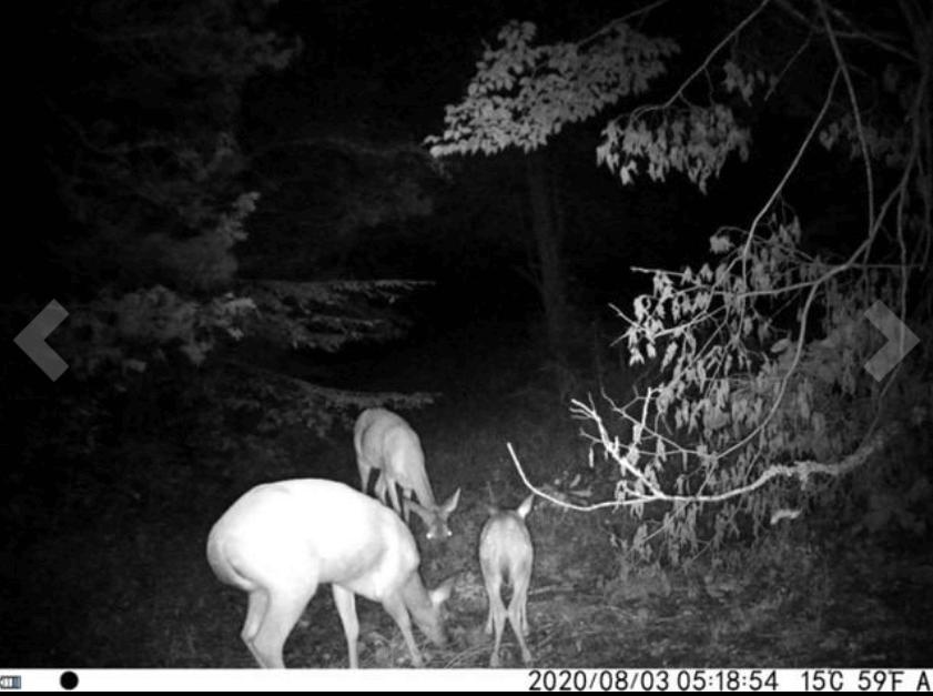 campark t75 trail camera setup at night
