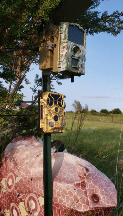 Campark T80 trail camera setup