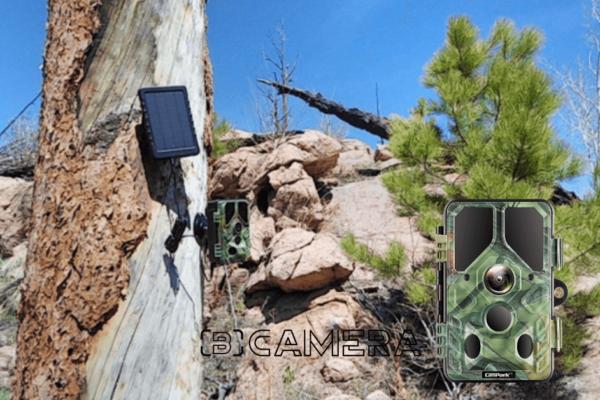Campark T85 Trail Camera Review 2021: Best Little Trail Camera