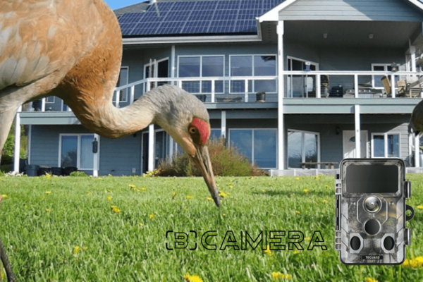 Toguard H85 Review 2021: Awesome WiFi Trail Camera