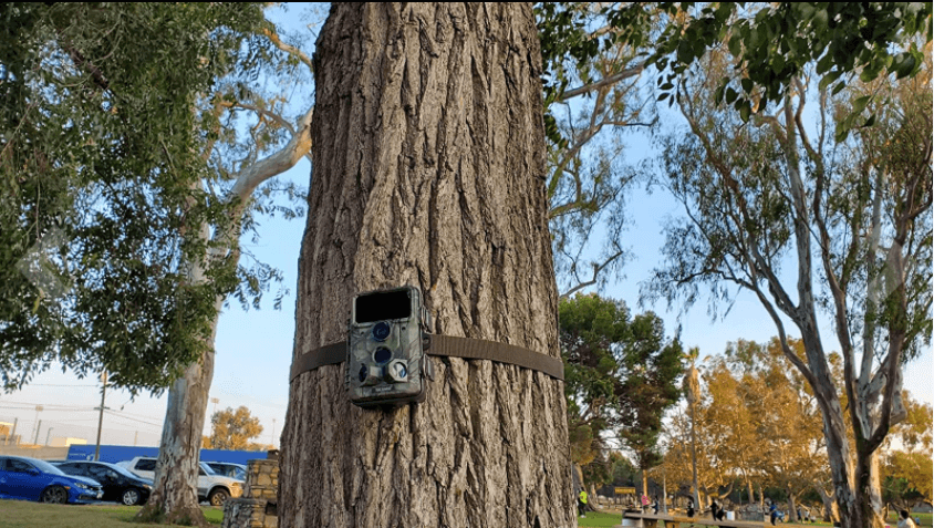 toguard h85 trail camera setup