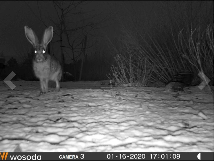 wosoda trail camera setup at night